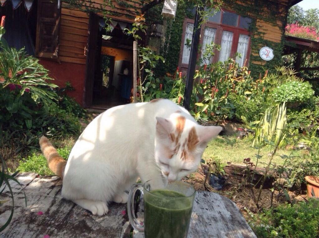 Ivan's Thaise kat hier weer aan de drank. Of zij daar nu nog werkt is onduidelijk.