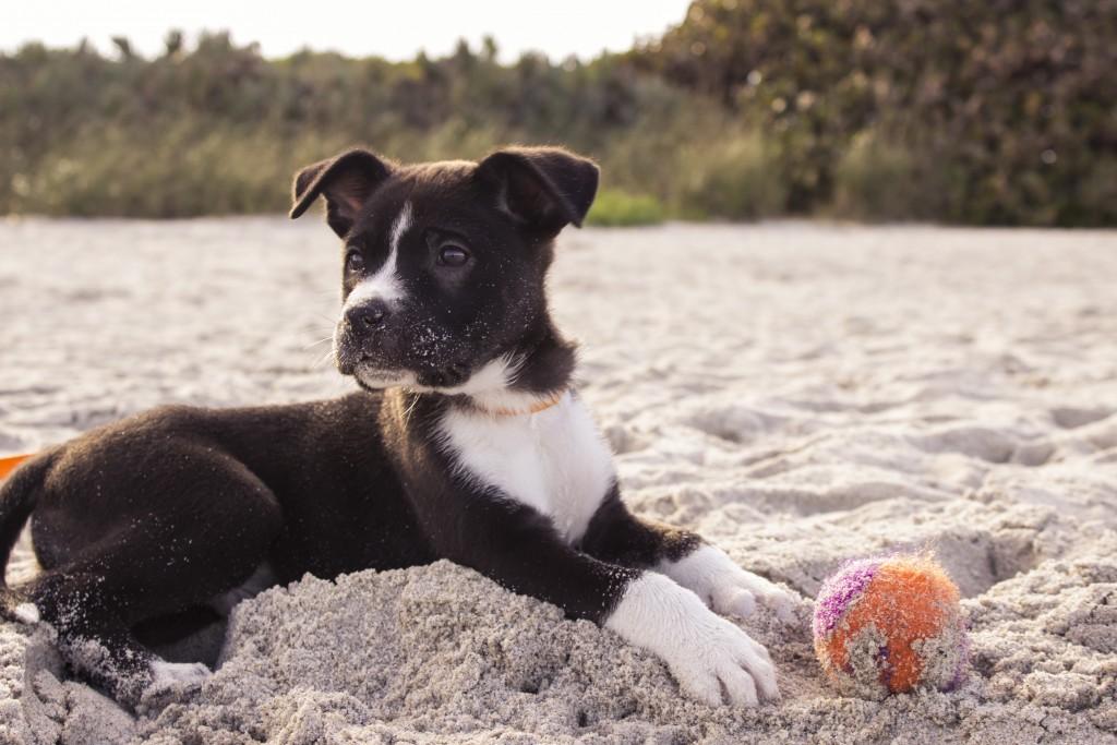 puppy bal